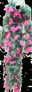 גולש ורדים