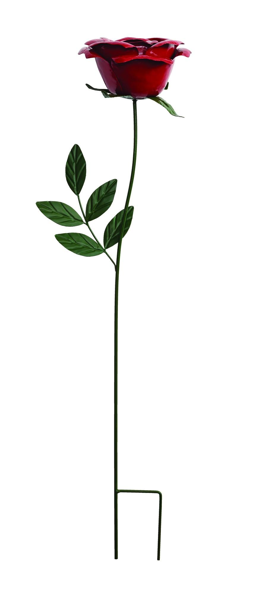 ורד בר על יתד -  75 ס