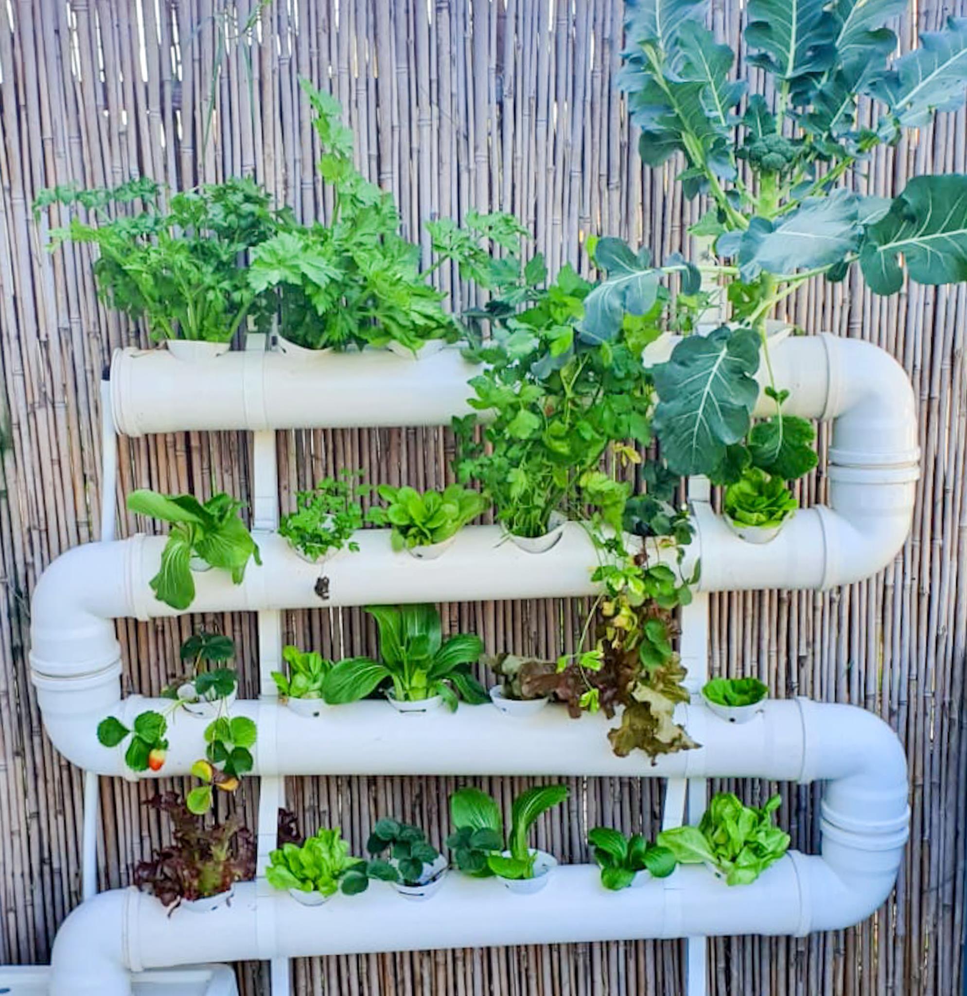 מערכת הידרופוניקה 24 צמחים