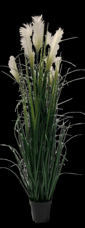 עציץ פרח לבן