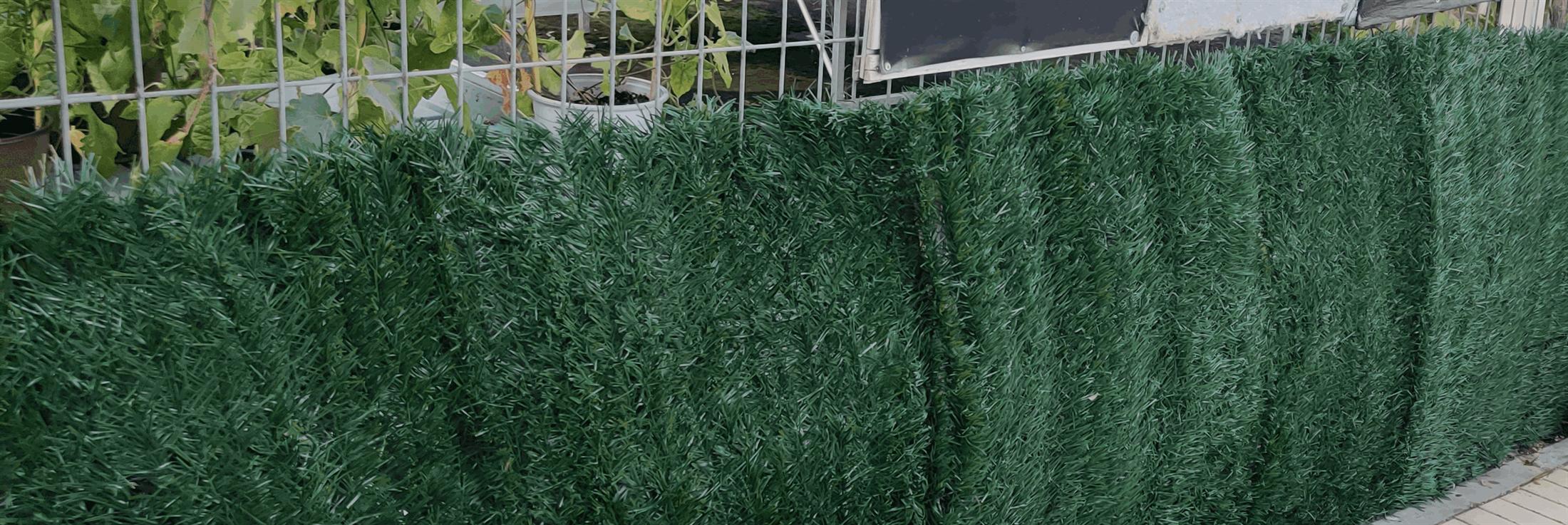 גדר ירוקה