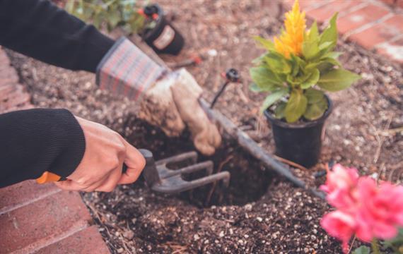 אחזקת הגן והטיפול בגינה - תפיסה חדשה