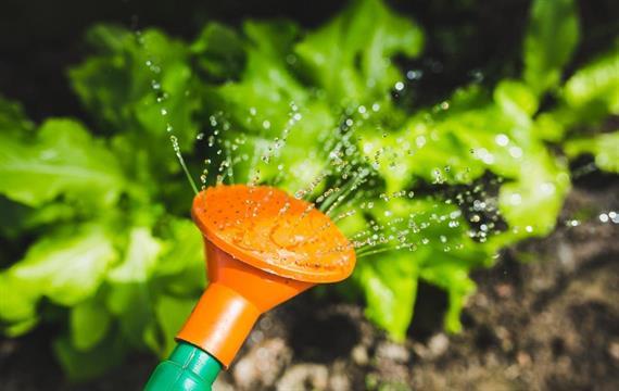 עצות מעשיות לחיסכון במים בגינה